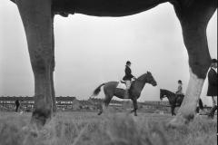 Ponywedstrijden_1971 (4)