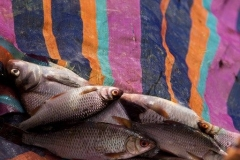 Viswedstrijd (23)