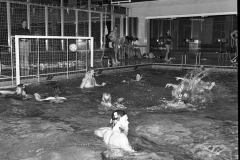 Zwemmen (17)