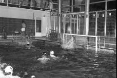 Zwemmen (19)