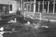 Zwemmen (21)