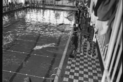 Zwemmen (5)